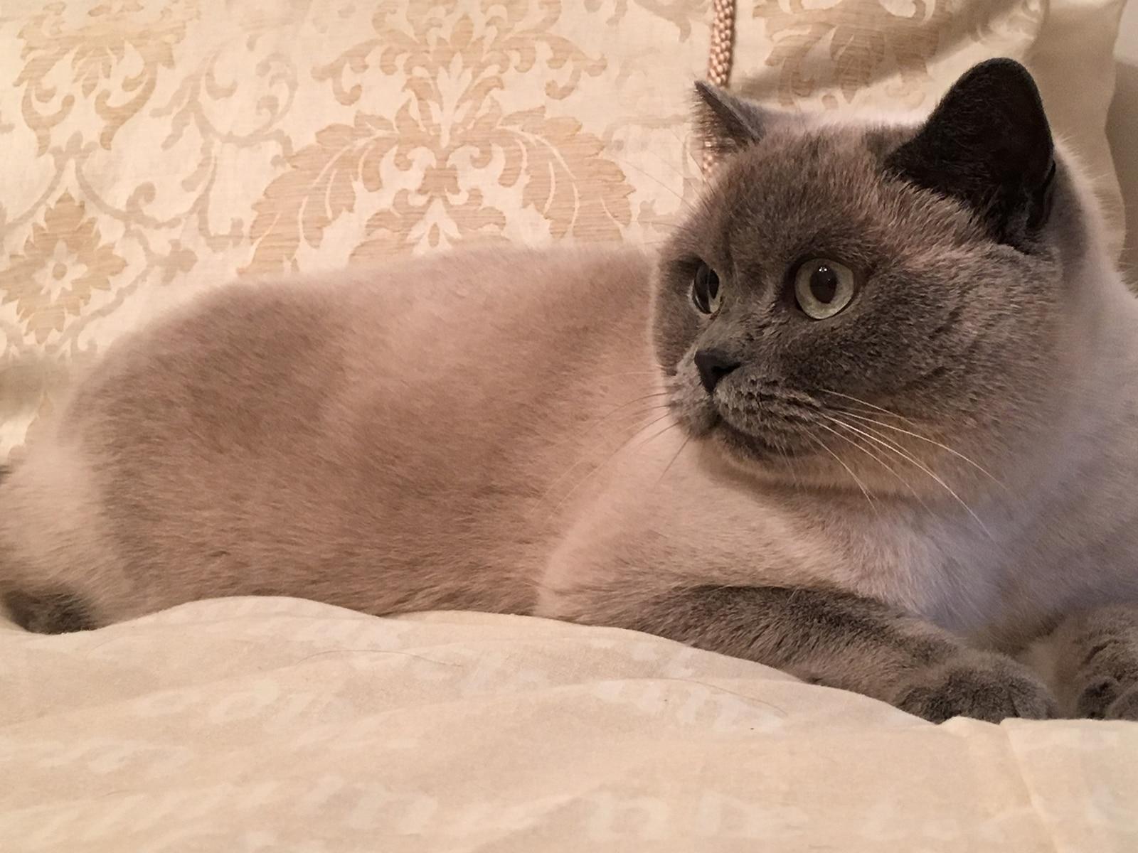 cat care service croydon purley sanderstead