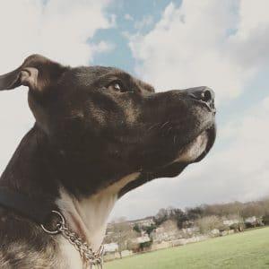 best pet care service in croydon