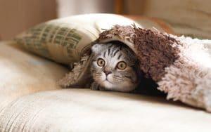 scared cat under blanket cat behaviour consult
