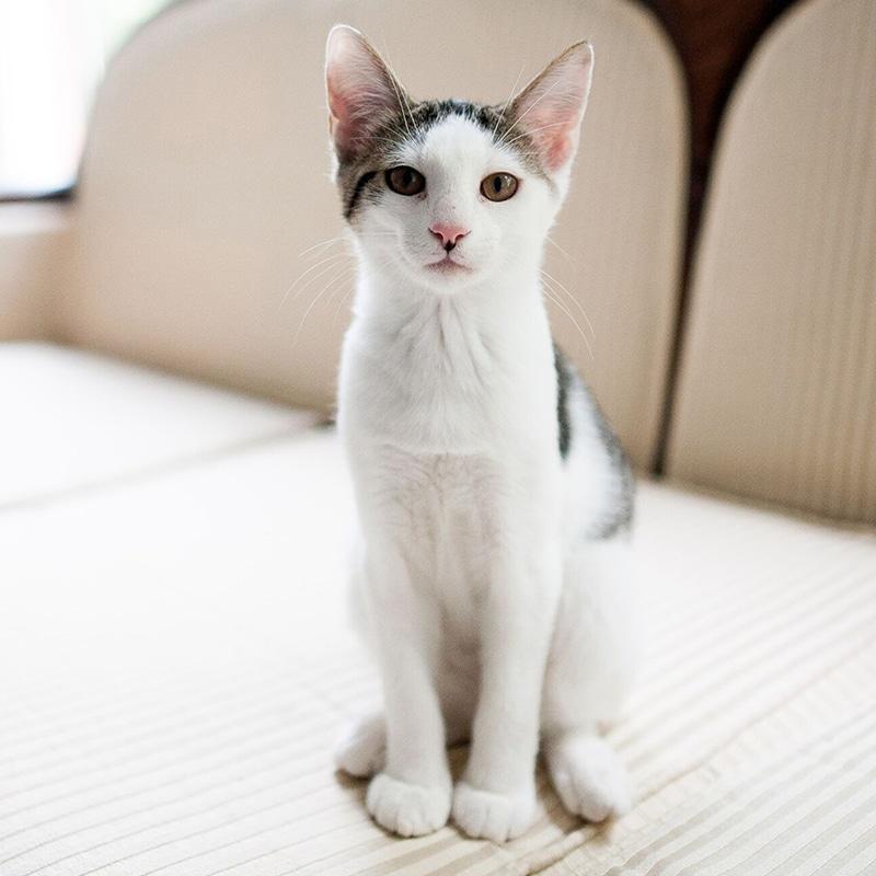 white cat on sofa cat behaviour consult