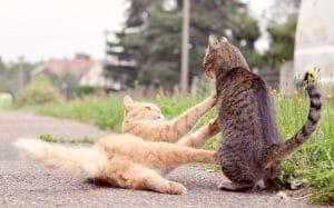 Cat behaviour training consult croydon