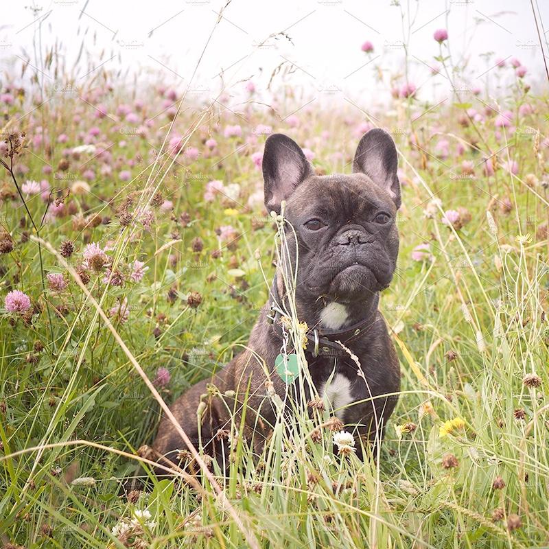 croydon doggy daycare Purley Shirley Kenley Sanderstead