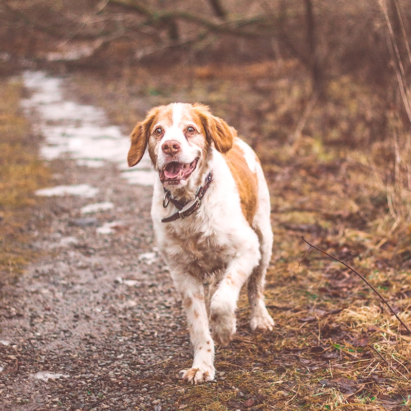 dog walker croydon purley kenley sanderstead