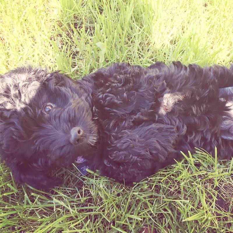 charlie bears pet care dog walker service croydon