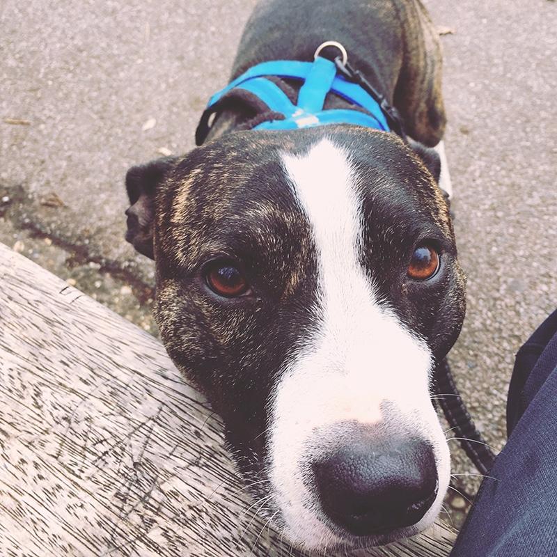 best dog walking service in croydon charlie bears pet care