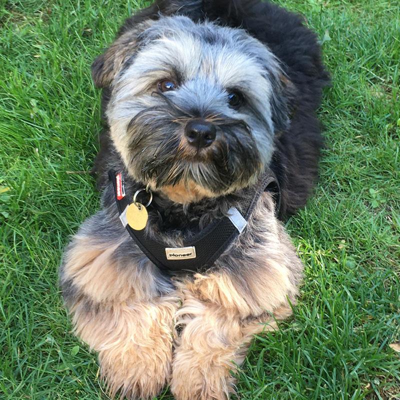 best doggy daycare in croydon surrey