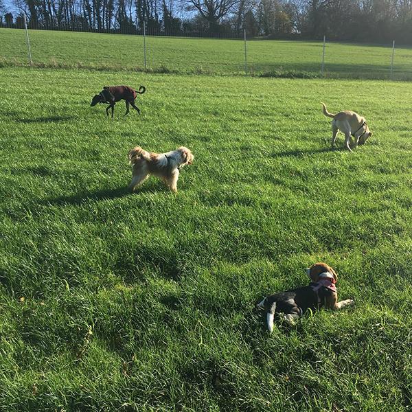 dog daycare Caterham Kenley