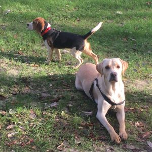 dog daycare Netherne On Hill Chaldon Caterham