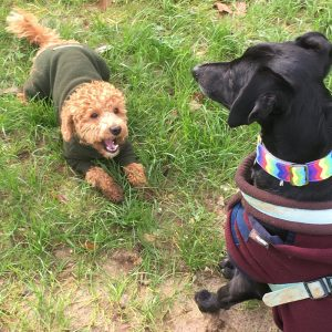 dog daycare Purley Coulsdon Banstead Chipstead