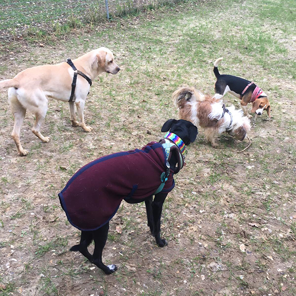 dog daycare Purley Coulsdon
