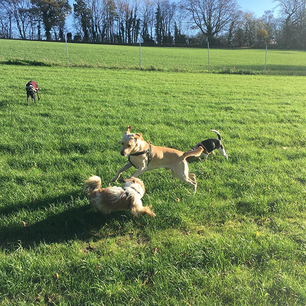 doggy daycare Banstead Chipstead