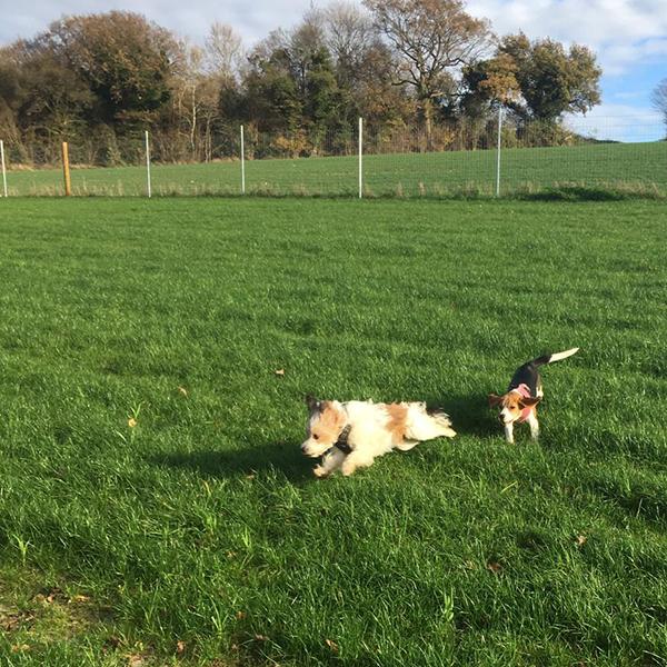 doggy daycare Netherne On Hill Chaldon