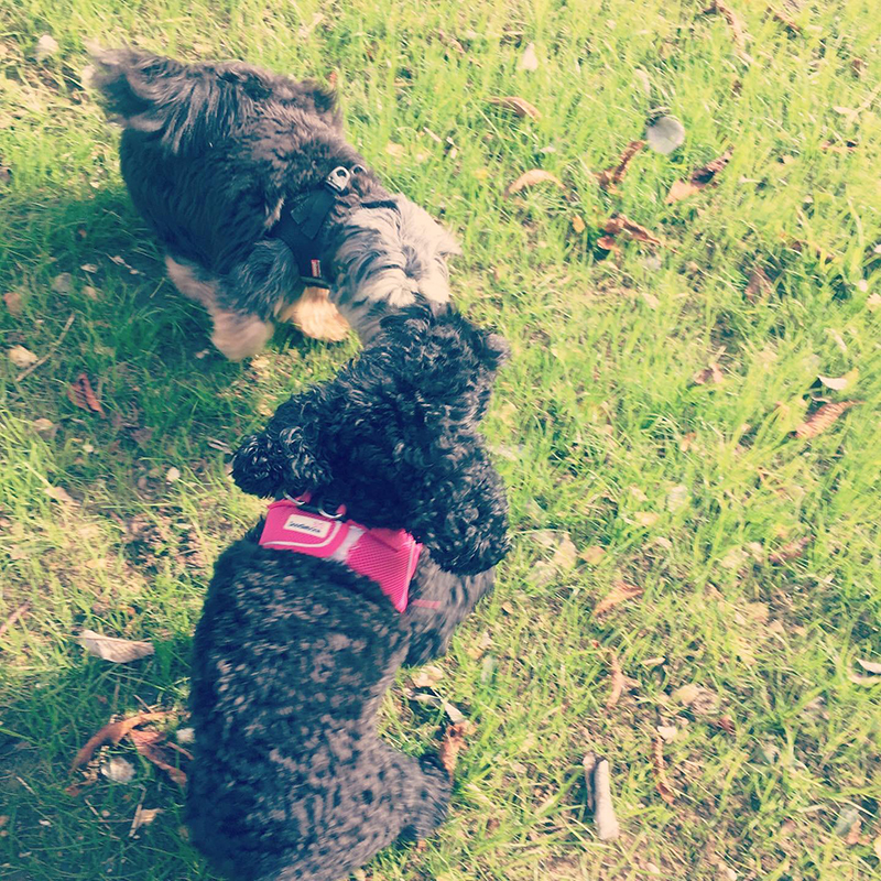 doggy daycare Purley Coulsdon Banstead Chipstead