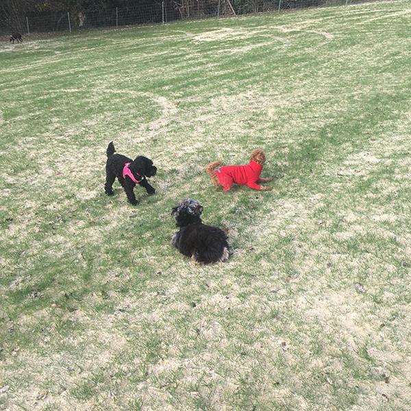 Doggy Daycare Croydon