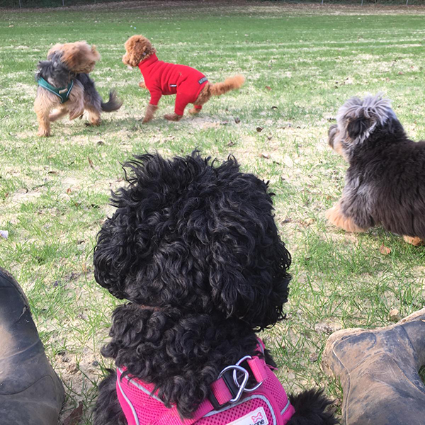 dog daycare Chipstead Netherne On Hill Chaldon Caterham Kenley