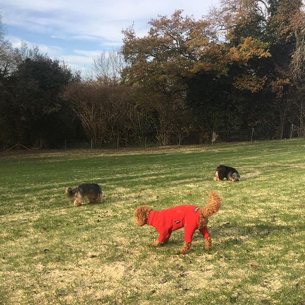 doggy daycare Purley Coulsdon Banstead