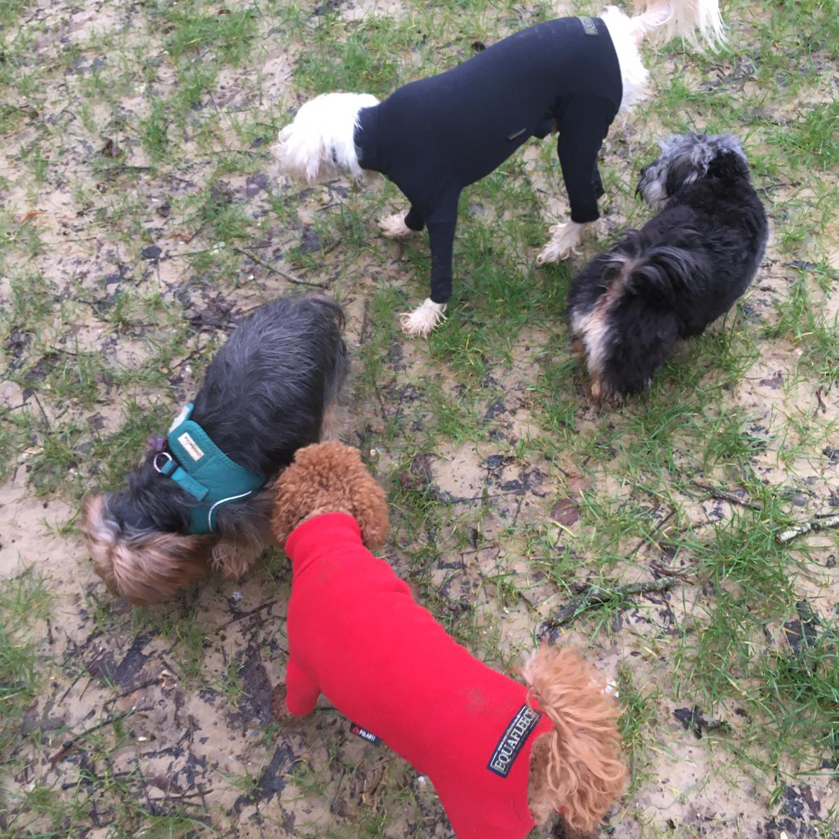 Charlie Bears Doggy Daycare for little dogs