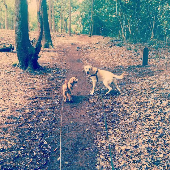 dog walker walking croydon