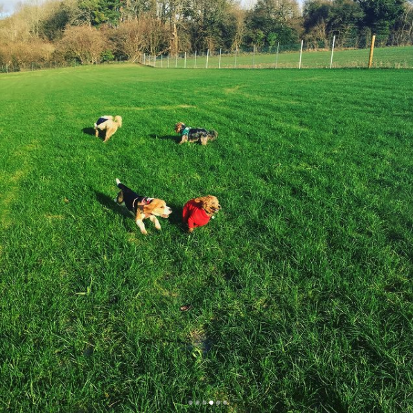 doggy daycare croydon purley coulsdon