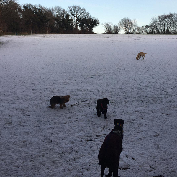 dog daycare in the snow netherne on hill CR5