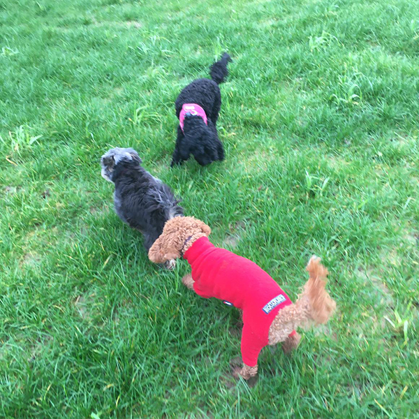 doggy daycare for small dogs caterham