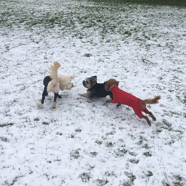 doggy daycare in the snow croydon