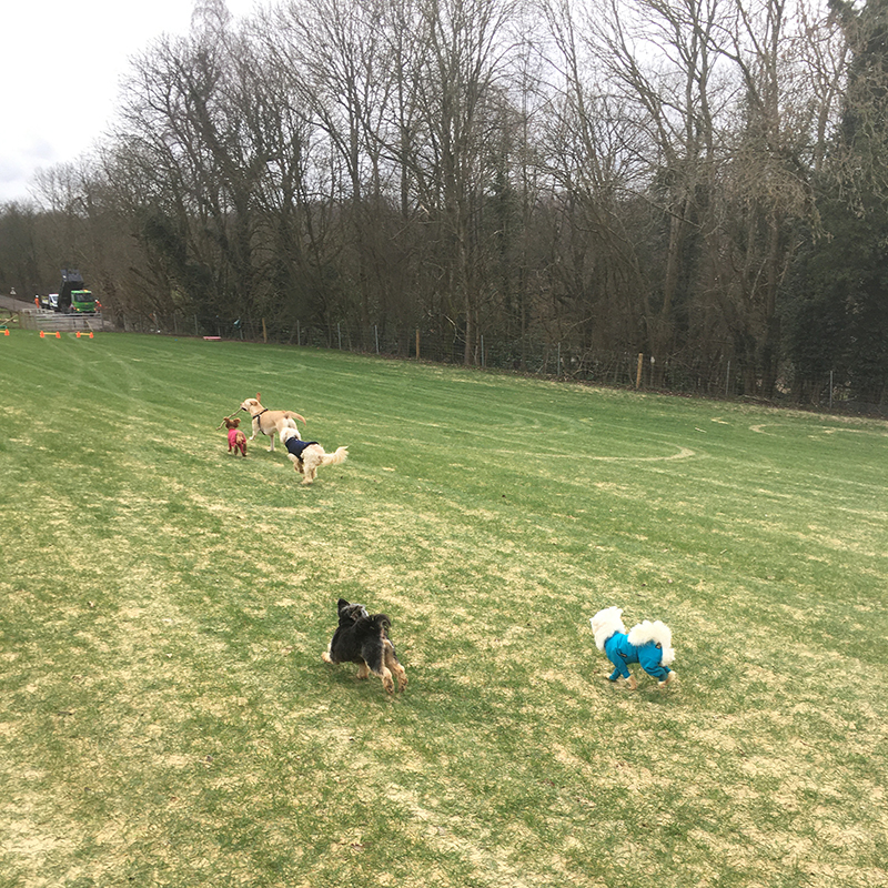 local doggy daycare near banstead