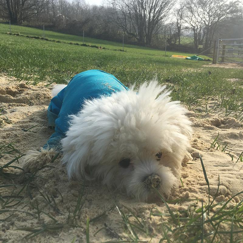 local doggy daycare near chipstead