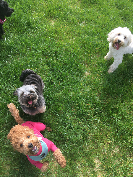 doggy daycare for small dogs croydon