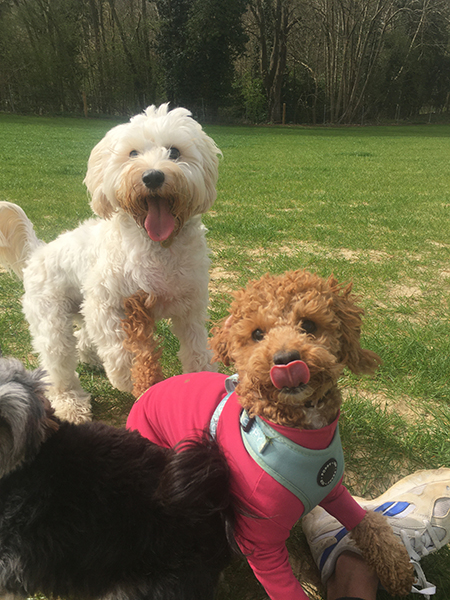 doggy daycare near me coulsdon